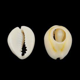 Dabīgas SHELL čaulas krelles kaklarotu rotaslietām Balta-dzeltenbrūna izmērs 5x0 5 mm