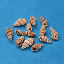 Natūralios spiralinės kriauklės - pakabukai 4 vnt., 14-40x10-20x3-15 mm, 1 maišelis