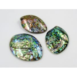 Abalone sinks cabochon 52x39 mm, 1 pcs.